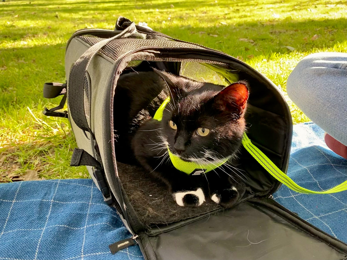 Tootsie sat in his cat carrier peeking out at the park. We're sat on a checked blanked in the sun.
