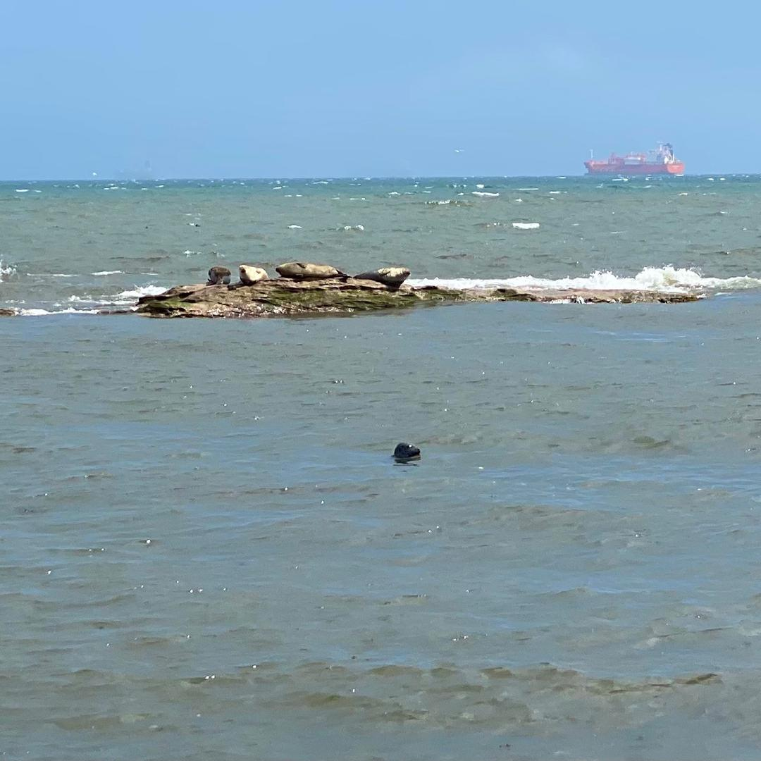 Some seals basking on rocks in the sea