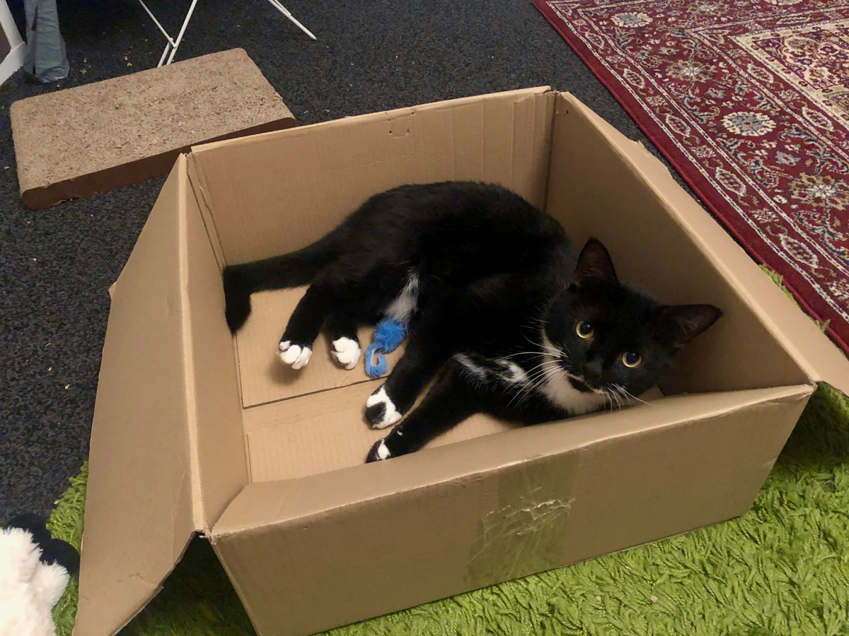 Tootsie laying in his new favourite cardboard box. He's a black and white cat, with a very distinctive moustache. A discarded toy mouse is laying beside him